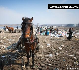 Cavalli in Romania4