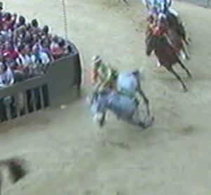cavallo selva caduta 1