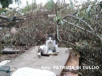 gatto campo rom