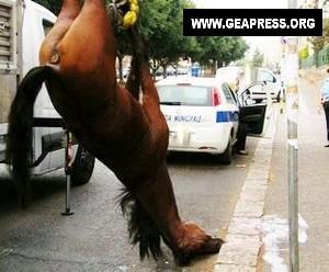 cavallo via basile