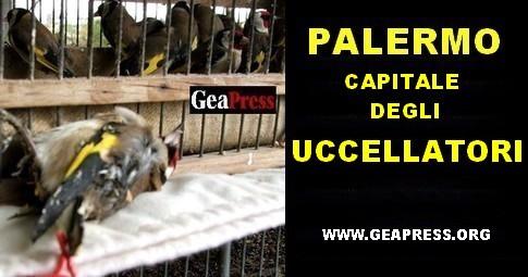 PALERMO CAPITALE UCCELLATORI