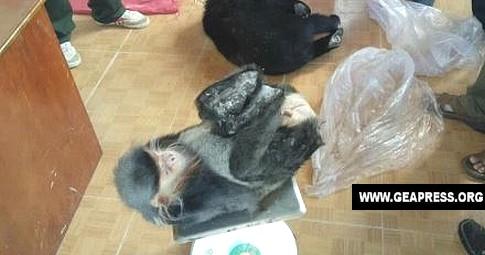 scimmia congelata