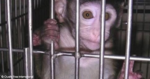 scimmia cruelty