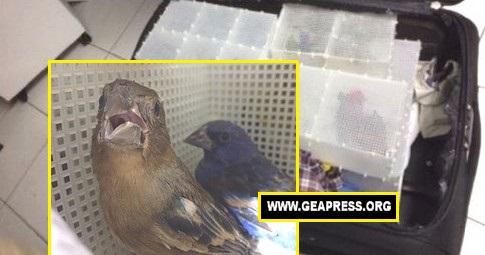 spagna uccellagione